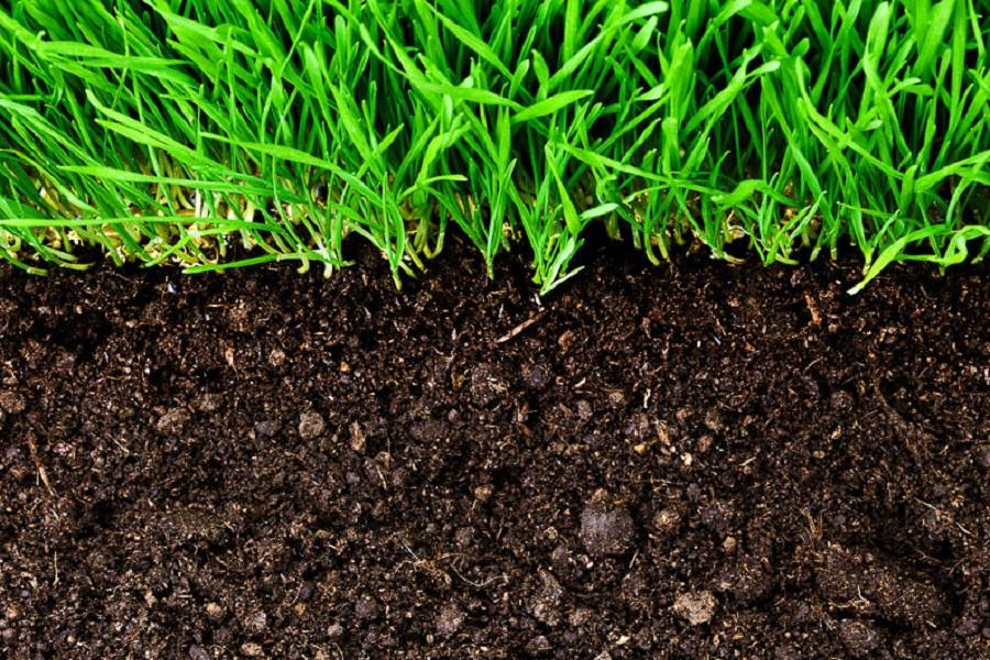 Виды грунта для растений