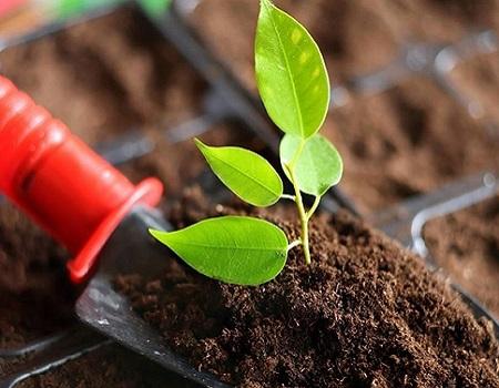 Питательный грунт для растений