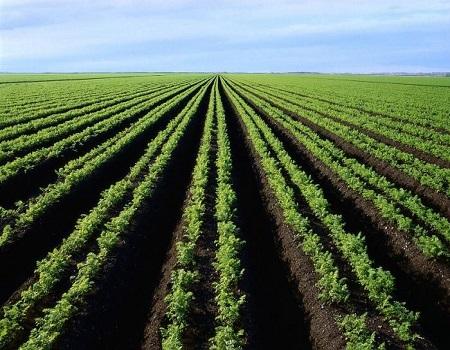 Грунт — плодородная земля