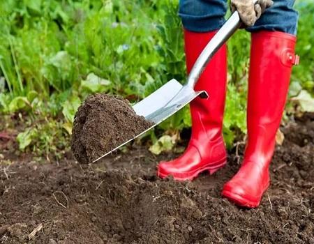 Плодородная земля для огорода