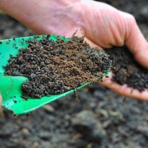Плодородный грунт, растительный и садовый - чем отличаются